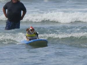 surfdog09