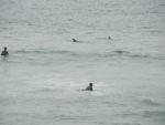 Dolphin (7)